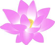 Free Flower, Pink, Purple, Violet Stock Photo - 95616450