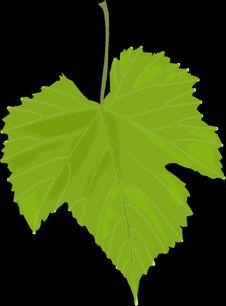 Free Leaf, Grape Leaves, Plant, Plant Stem Royalty Free Stock Images - 95617079