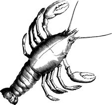 Free Seafood, Invertebrate, Black And White, Decapoda Stock Images - 95618804