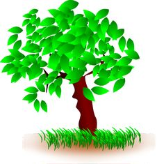 Free Tree, Green, Woody Plant, Plant Stock Photography - 95618902