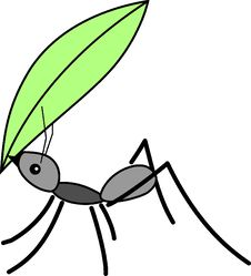 Free Leaf, Invertebrate, Black And White, Insect Stock Photo - 95619050
