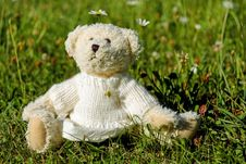 Free Teddy Bear, Grass, Stuffed Toy, Snout Royalty Free Stock Photo - 95619645