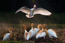 Free Bird, Beak, Stork, Seabird Royalty Free Stock Images - 95619659