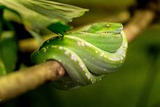Free Leaf, Macro Photography, Reptile, Scaled Reptile Royalty Free Stock Photo - 95621225