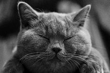 Free Cat, Whiskers, Black, Black And White Royalty Free Stock Images - 95621239