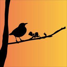 Free Bird, Beak, Silhouette, Fauna Stock Photography - 95621522