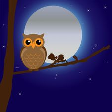 Free Owl, Bird Of Prey, Vertebrate, Sky Stock Image - 95621611