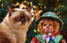 Free Cat, Small To Medium Sized Cats, Cat Like Mammal, Whiskers Royalty Free Stock Photo - 95621905