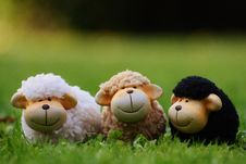Free Mammal, Stuffed Toy, Sheep, Grass Royalty Free Stock Photos - 95622478