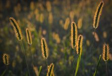Free Flora, Grass Family, Sky, Grass Royalty Free Stock Image - 95622576