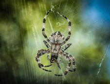 Free Spider, Arachnid, Orb Weaver Spider, Invertebrate Stock Photography - 95622942