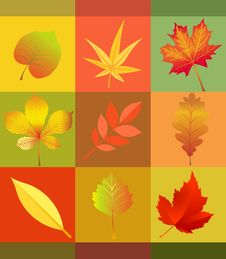 Free Leaf, Orange, Maple Leaf, Flower Royalty Free Stock Images - 95623059