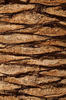 Free Wood, Rock, Geology, Trunk Stock Photo - 95623170