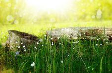 Free Grass, Vegetation, Wildflower, Meadow Royalty Free Stock Image - 95623176