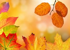 Free Leaf, Deciduous, Autumn, Orange Stock Photo - 95623290