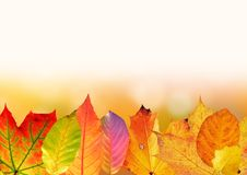 Free Leaf, Yellow, Maple Leaf, Autumn Stock Images - 95623324