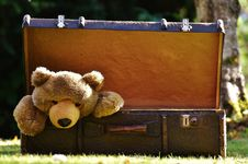 Free Teddy Bear, Grass, Snout, Toy Stock Photo - 95623400
