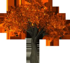 Free Tree, Leaf, Orange, Autumn Royalty Free Stock Photography - 95624437