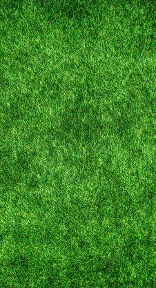 Free Green, Grass, Vegetation, Lawn Royalty Free Stock Photos - 95624558