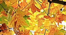 Free Autumn, Fall Leaves, Leaves Royalty Free Stock Photos - 95624648