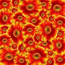 Free Flower, Gerbera, Chrysanths, Blanket Flowers Stock Images - 95624684