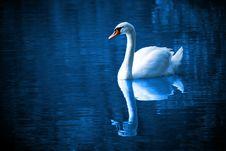 Free Swan, Reflection, Water, Water Bird Stock Photos - 95626923