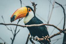 Free Yellow Long Beak Bird Standing On Tree Branch Royalty Free Stock Image - 95644886