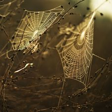 Free Spider Web, Water, Moisture, Morning Royalty Free Stock Image - 95658056