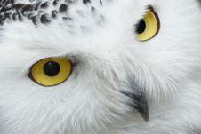 Free Owl, Beak, White, Bird Of Prey Stock Photos - 95664243