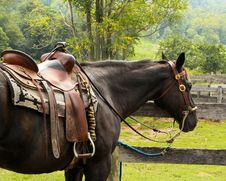 Free Bridle, Horse, Horse Harness, Rein Royalty Free Stock Photography - 95669657