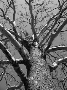 Free Tree, Branch, Black And White, Woody Plant Stock Photo - 95669790