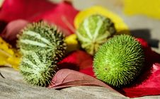 Free Fruit, Plant, Thorns Spines And Prickles, Cactus Royalty Free Stock Image - 95671756