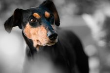 Free Dog, Dog Like Mammal, Dog Breed, Snout Stock Images - 95673344