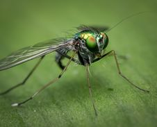 Free Insect, Invertebrate, Pest, Macro Photography Stock Images - 95675364