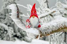 Free Snow, Winter, Freezing, Tree Stock Photography - 95677692