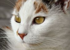 Free Cat Portrait Royalty Free Stock Photo - 95697575