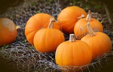 Free Orange Pumpkins Stock Image - 95697801