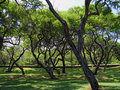 Free Nice Park With Huge Number Of Olive Trees Stock Photo - 9578750