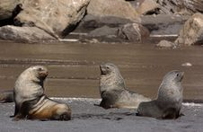 Free Seal Stock Photography - 9570442