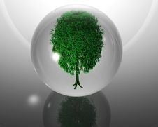 Free Green Ecological Tree In Glass Orb Royalty Free Stock Photography - 9571147