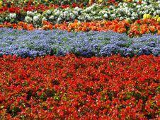 Free Flora 07 Stock Image - 9572461