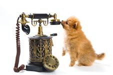 Free Puppy Of A Spitz-dog With Phone Royalty Free Stock Photos - 9572648