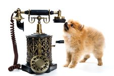 Free Puppy Of A Spitz-dog With Phone Stock Photos - 9572663
