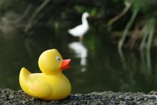 Free Amusing Picture Of A Plastic Duck Royalty Free Stock Images - 9574229