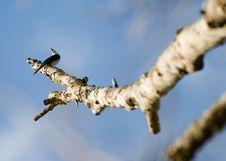 Free Bird On The Tree Trunk Royalty Free Stock Photos - 9574648
