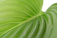 Free Leaf Royalty Free Stock Photography - 9575807