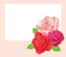 3 Roses Stock Image