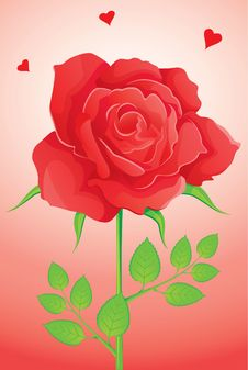 Free Red Rose Royalty Free Stock Photography - 9576507