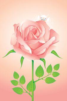 Free Pink Rose Stock Photo - 9576510
