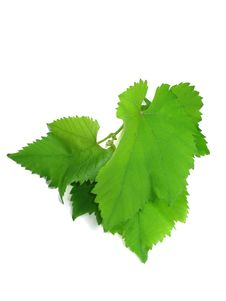 Free Green Grape Leaves Isolated Over White Royalty Free Stock Images - 9577739